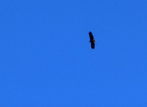 På himmelen over oss svevet det en ørn.