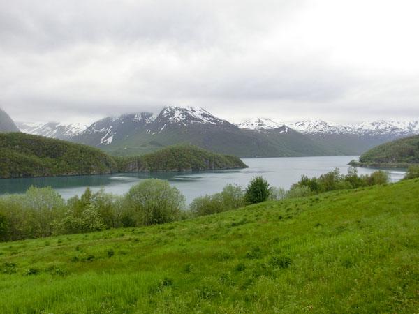 Fjorden hvor Svartisen kommer ned er uvanlig frodig.
