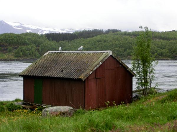 Et snapshot fra Saltstraumen.
