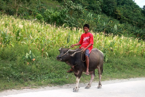 Et vanlig transportmiddel på Filippinene