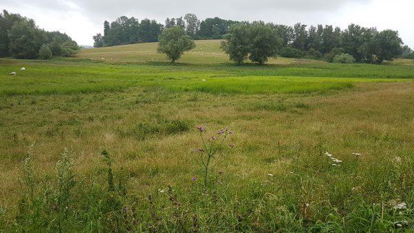 (10:13) Landskapet bølger seg opp og ned så det er da noen bakker her. Spesielt der de har lagt sykkelruten virker det som :-)